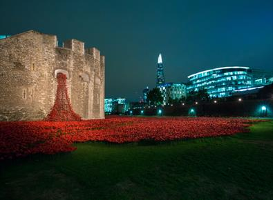 Poppies at Night, Tower of London |